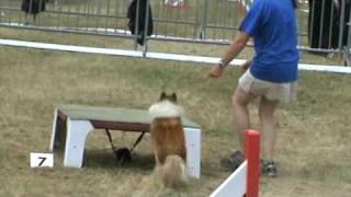 SISSI-SAIGA Berger des Shetland manche 1 agility cat A