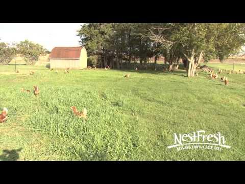 NestFresh Free Range Hens