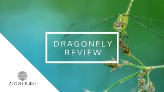 Zoologist - Dragonfly review