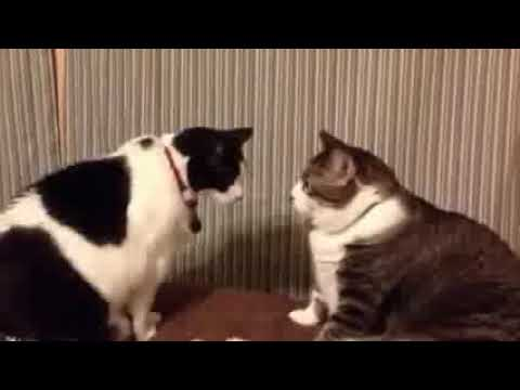 Funny Cats   Fail Compilation, Funny Pranks and Funny Videos Videos  New Funny Video