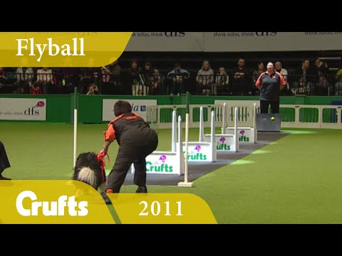 Flyball - Team Finals 2011 | Crufts Dog Show
