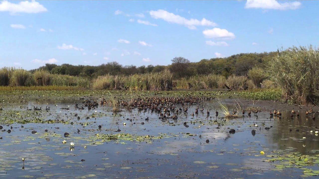 How To Stop Rust >> Rust de Winter Dam Crocodiles - YouTube