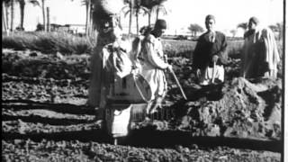 Farming in Egypt in the 1930's.  Archive film 93722