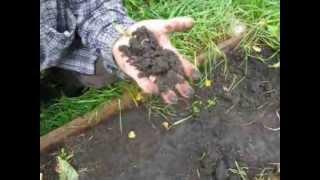 Чернозём на даче - покупать или выращивать (2)?