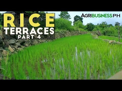 Rice Terraces Part 4 : How to build Rice Terraces | Agribusiness Philippines