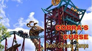 Cobra's Curse - Montanha-russa do Busch Gardens