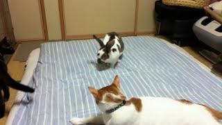 ネコとウサギはけっこう仲良しになることが多いです。