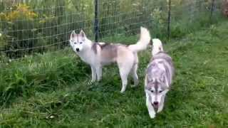 Trinacria & Sheytan's Beauty Kennel