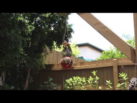 Around The Place - Hanging Plant in Pot - Natural and Real Sounds