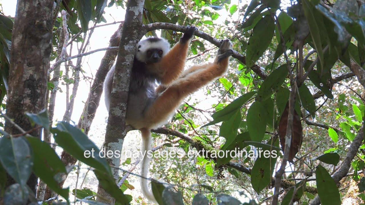 """""""Madagascar, les trésors verts de l'île rouge"""" Bande-annonce du DVD"""