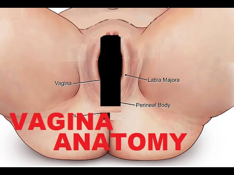 Vagina And Female Reproductive System Anatomy Youtube