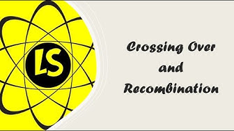 Crossing Over Imdb
