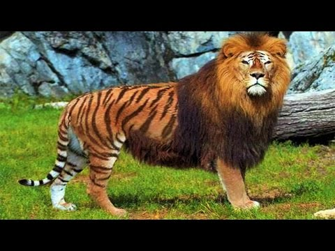 Top 10 Incredible Animal Hybrids