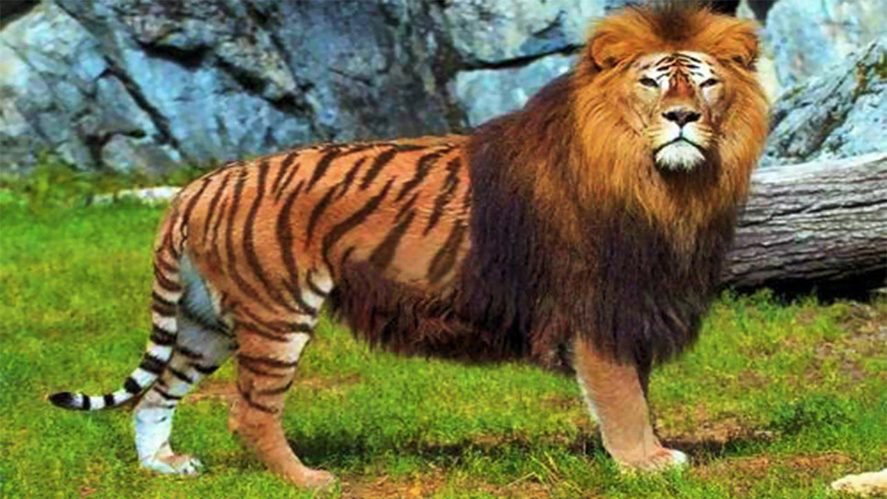 Top 10 Incredible Animal Hybrids - YouTube