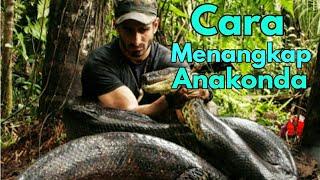 Hebat!! Orang Ini Menangkap Ular Anaconda Dengan Sangat Mudah