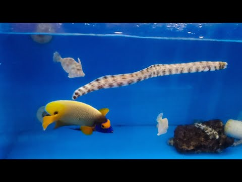 HUGE FISH STORE TOUR Pt 2!! Gerber's Tropical Fish - Saltwater Edition
