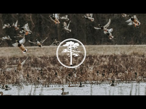 Duck Hunting- Duck Food Plots and Preparation
