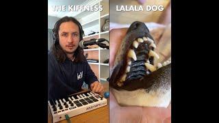 The Kiffness x Lalala Dog  Lalala (Live Looping Singing Dog Song)