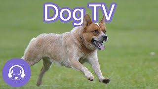 Dog TV: Calming and Relaxing Virtual Dog Walk (2021)