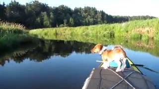 видео Правила рыбалки озеро ильмень: ильмень озера бассейн