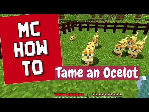 Minecraft How To - Tame Ocelots to Get Cats/Tutorial - 1 13 2 and
