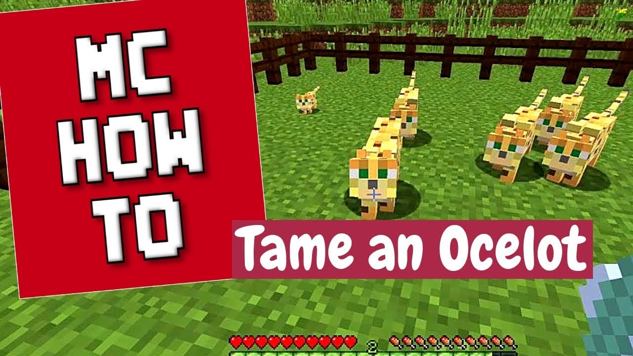 Minecraft How To - Tame Ocelots to Get Cats/Tutorial - 1 13 2 and earlier