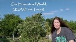 Our Homestead World - USA (East Texas)