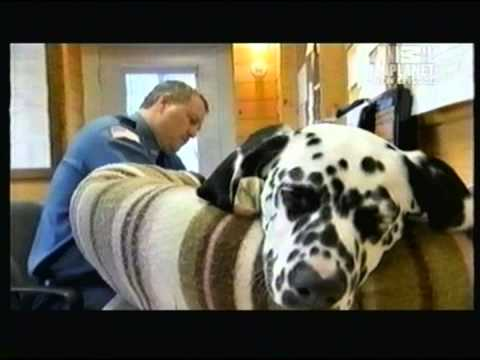 DOGS 101 ANIMAL PLANET 10 3 2009
