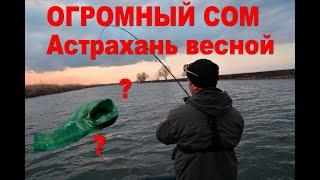 Клюнул огромный сом Рыбалка в Астрахани