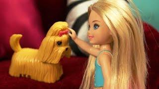 видео: Челси и потерянный щенок! БАРБ? Няня для П?ТОМЦЕВ ?грушки для Девочек
