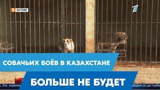 Владельцы бойцовских собак протестуют против нового закона о защите животных