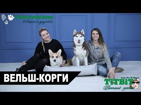 Хаски Флора TiTBiT