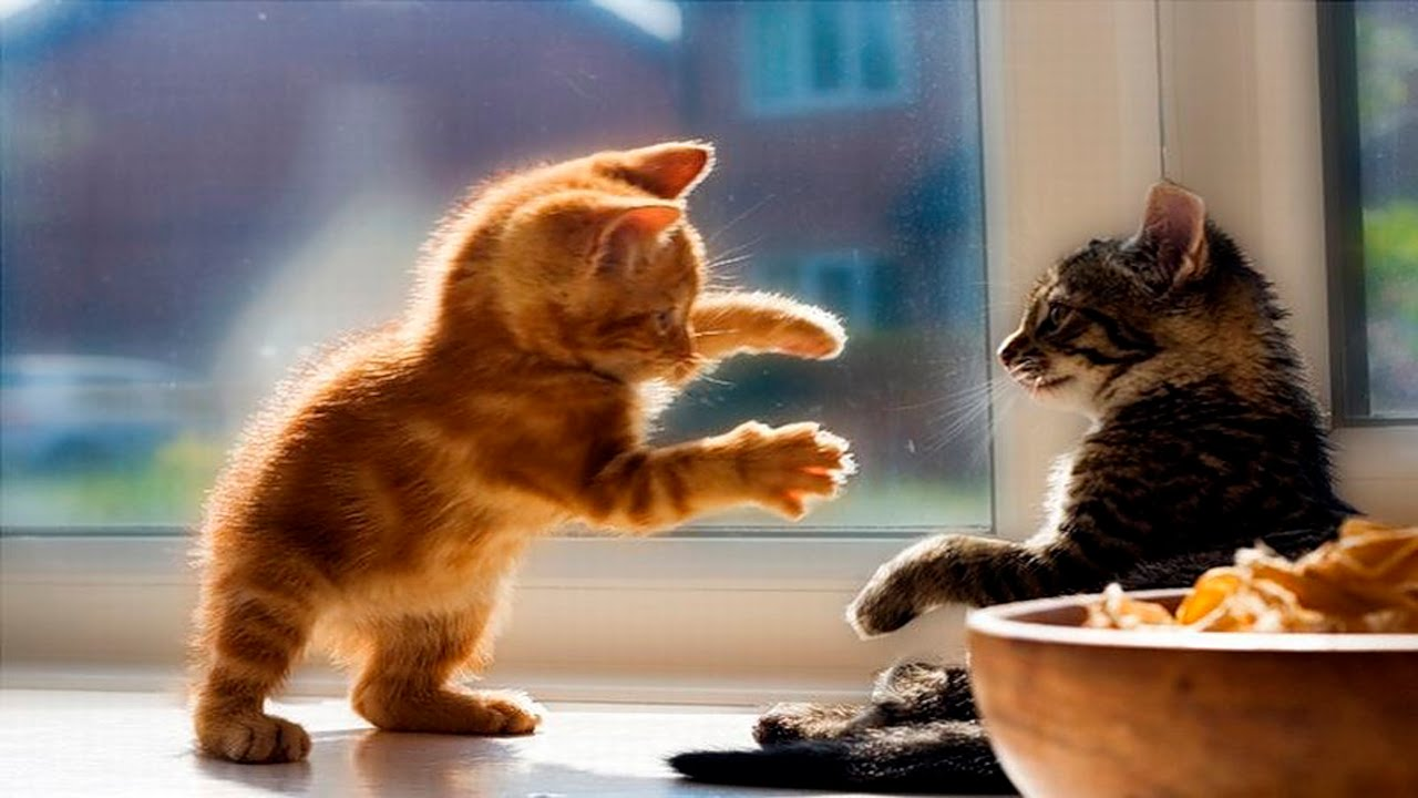 Funny Kittens Compilation April Funny Cats Funny Kittens You