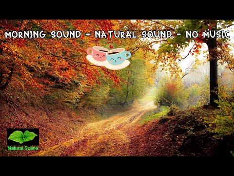 🌿Natural Sound: Morning Sound - Birds Chirping, No music 4k Ultra HD🌼
