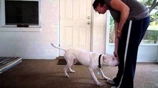 Teaching The Dog To Army Crawl