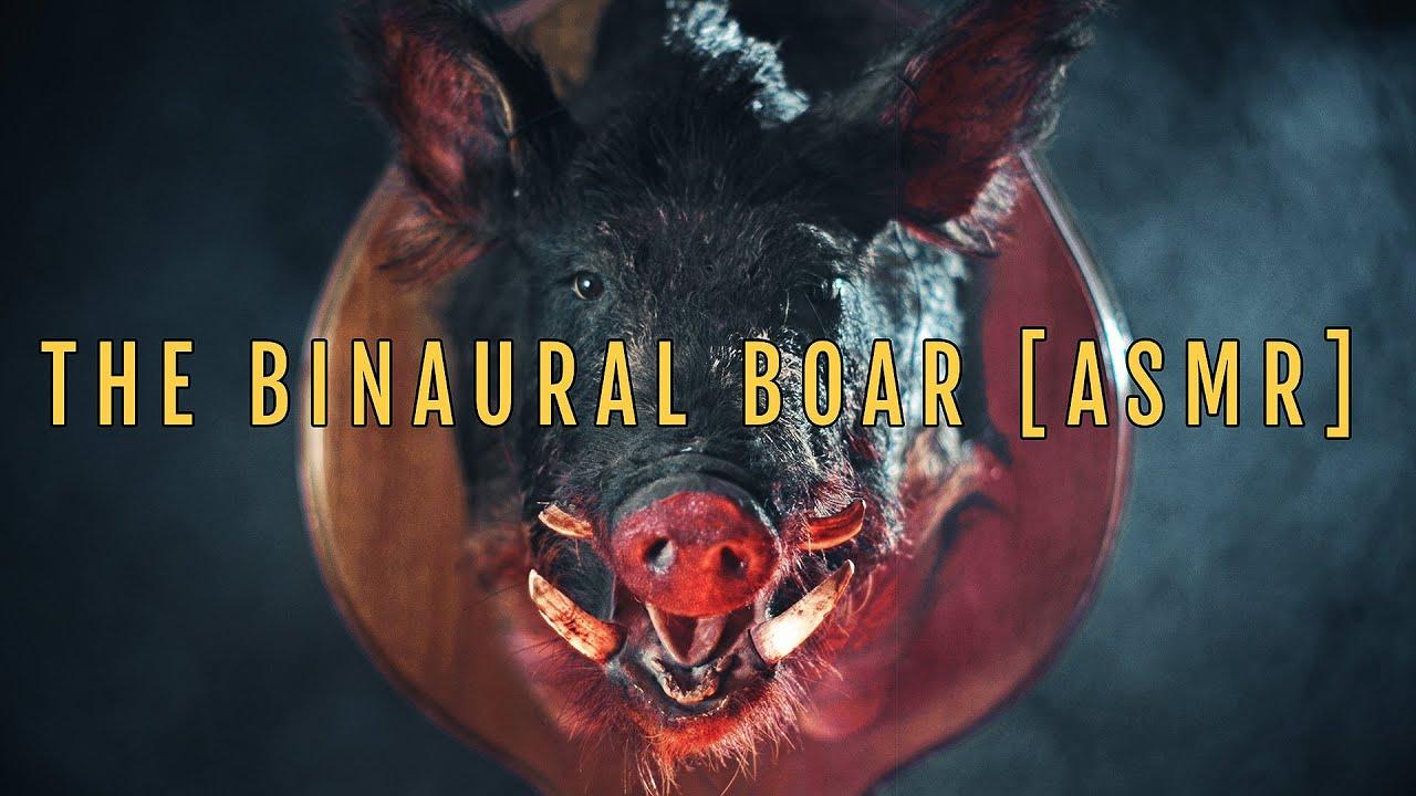 The Binaural Boar [ASMR]
