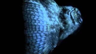 Mondkopf - Sweet Memories (Rising Doom) - UOP