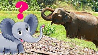 СЛЕДЫ ЖИВОТНЫХ для самых маленьких - развивающие мультики для детей - как говорят животные