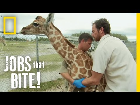 Giraffe Hug | Jobs That Bite