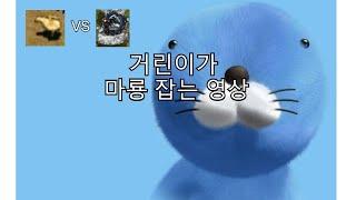 [거상] 거린이가 개거북차로 마룡잡는 영상