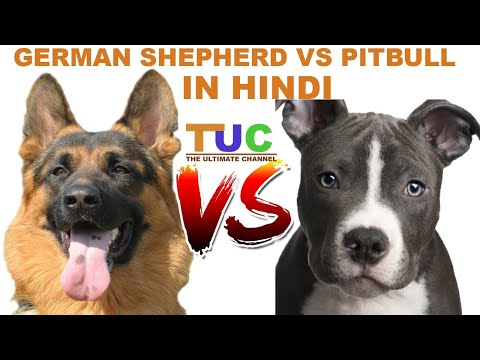 German Shepherd Vs Pitbull in hindi | Dog Comparison | The Ultimate Channel