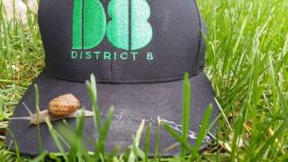 A snail's 🐌 life. District 8 - Just be relaxed.