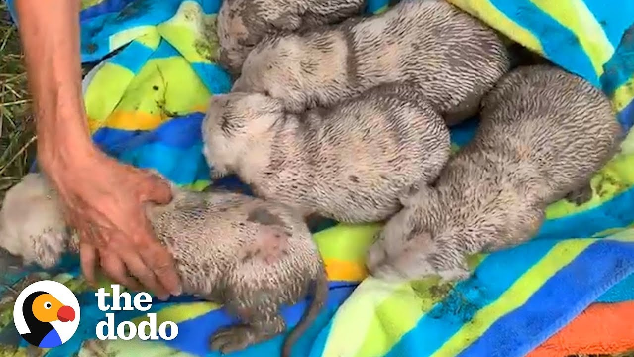 The Look On This Mama Dogs Face When She Realizes Her Babies Are Safe Is So Heartwarming  The Dodo