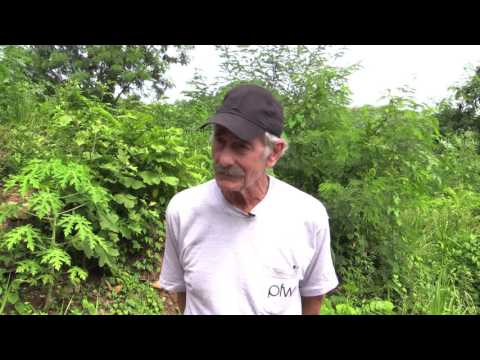 Protein From Waste Embracing Grenadian Farmers
