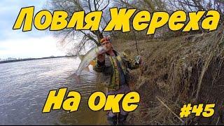 Ловля Жереха. Рыбалка на реке Оке