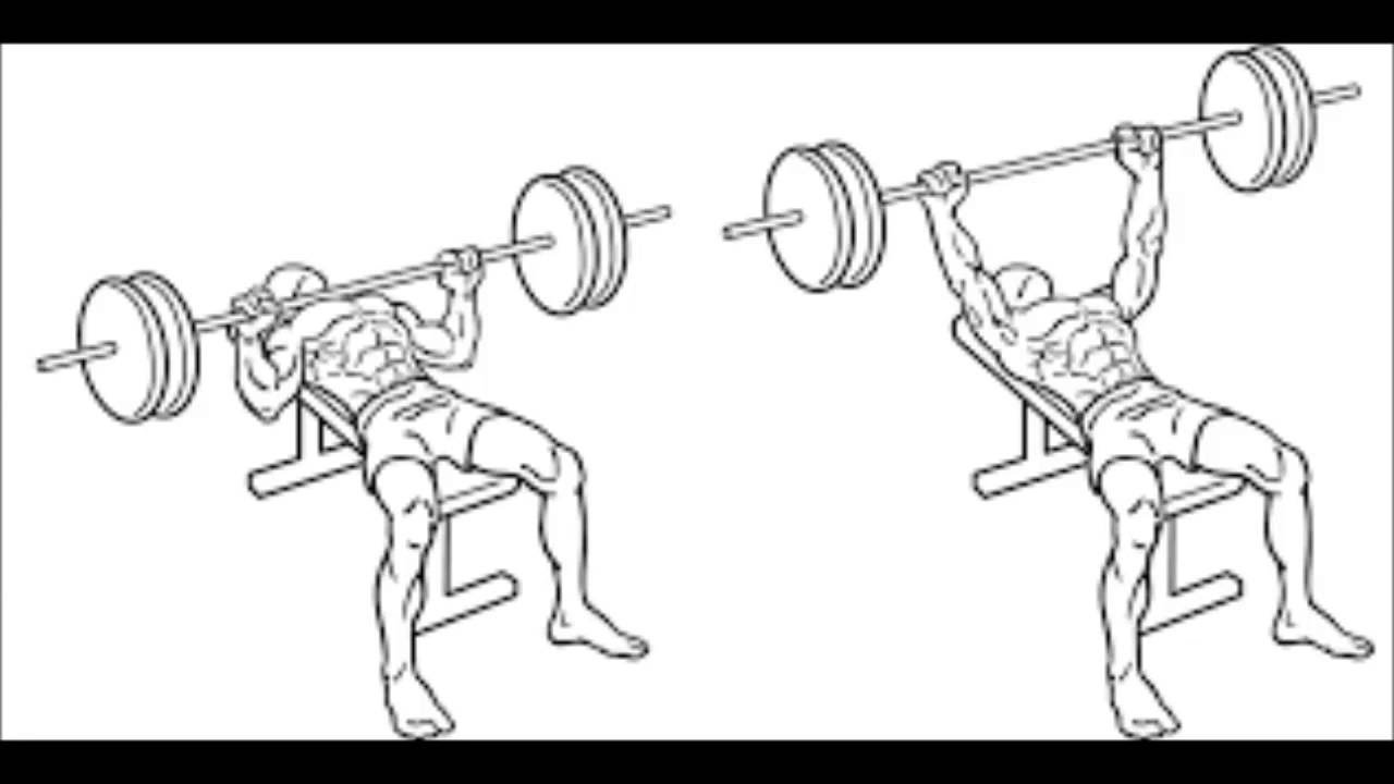 Does Bench Press Make Your Arms Bigger