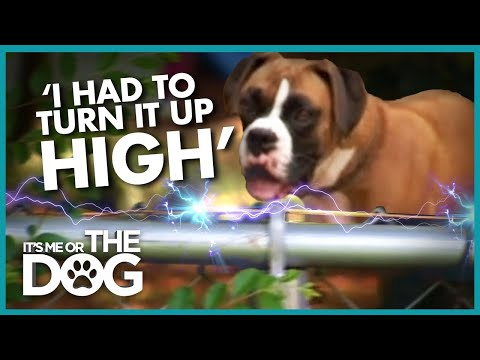 Dog Traumatised by Electric Fence  | It's Me or the Dog