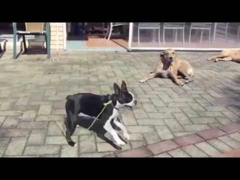 how-to-stop-dogs-barking