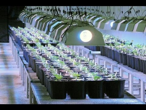 Highest-yield GROW-LIGHTS, SOIL, and GROW-POTS by Cannabis Frontier