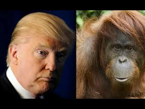 Real Time With Bill Maher Makes Fun Of Donald Trump  Dismisses 'Orangutan' Lawsuit HA HAAA!